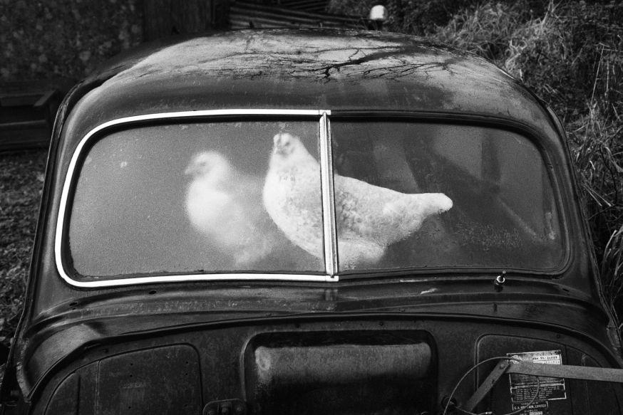 © Martin Parr  Magnum Photos
