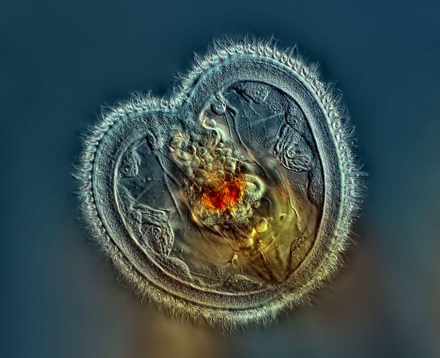 De microscopische wereld – photomicroscopy
