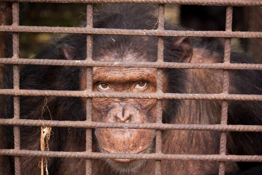 Als ogen konden spreken... ©WWF Ian Kneepkens