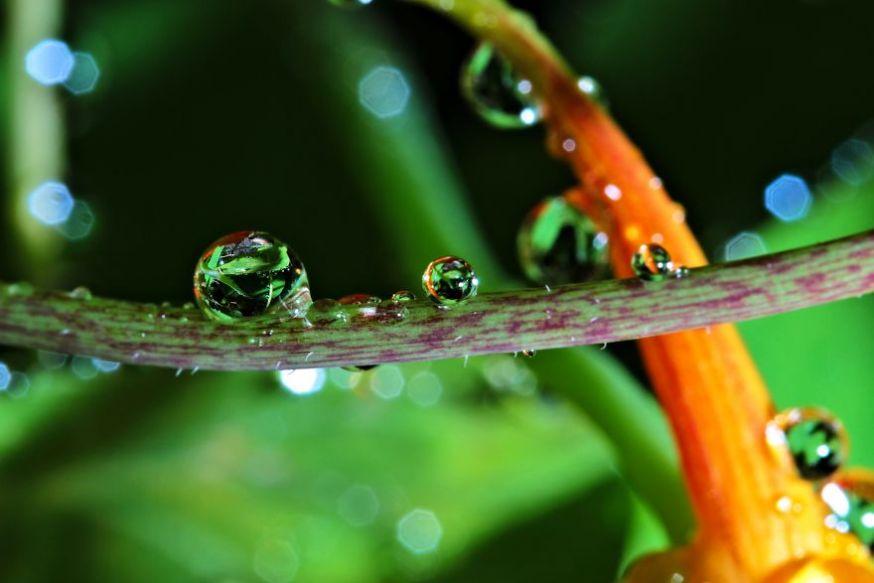 De wereld in regendruppels