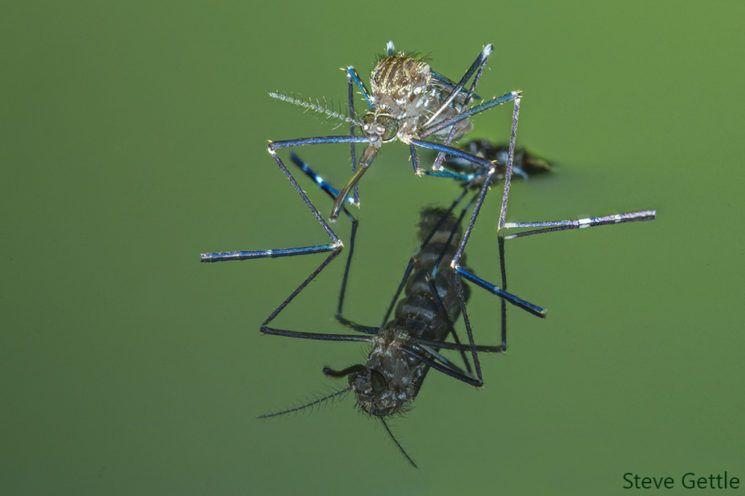 Een mug die uit zijn pop komt