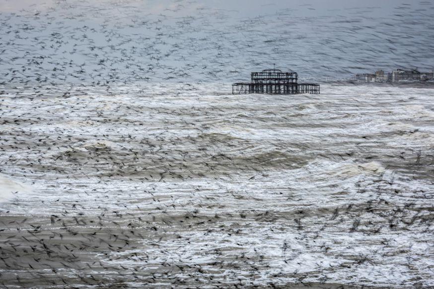 © Matthew Cattell - Starling Vortex, Brighton, oost Sussex, Engeland
