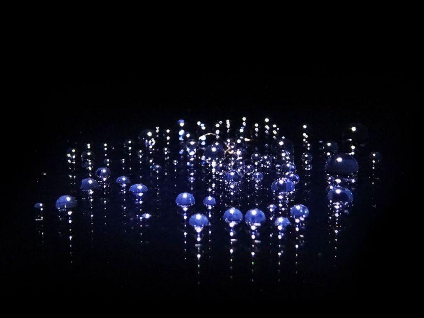 spotlight lezersfoto 16 juli eduardo de vlugt dandelion water