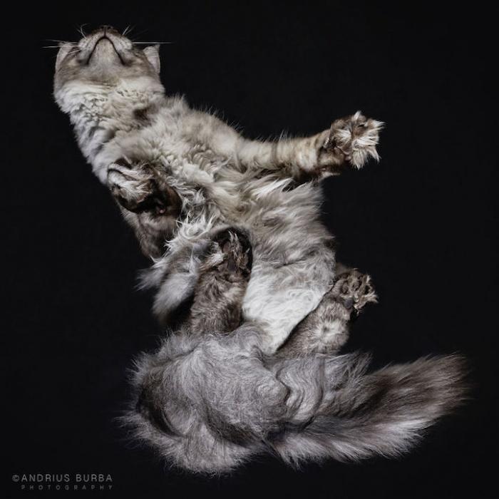 Bijzondere kattenfoto's