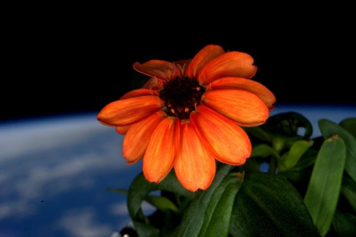 bloem in de ruimte