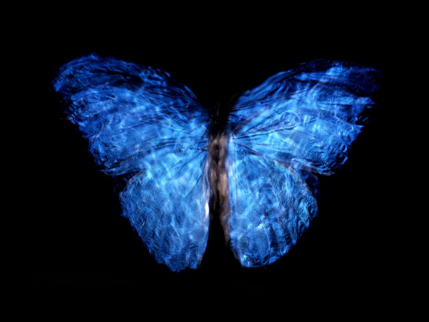 Vlinders in coma