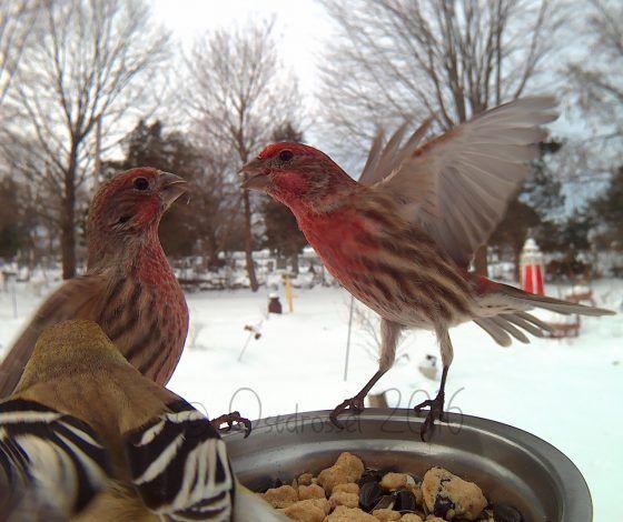 Vogels tijdens het eten gefotografeerd