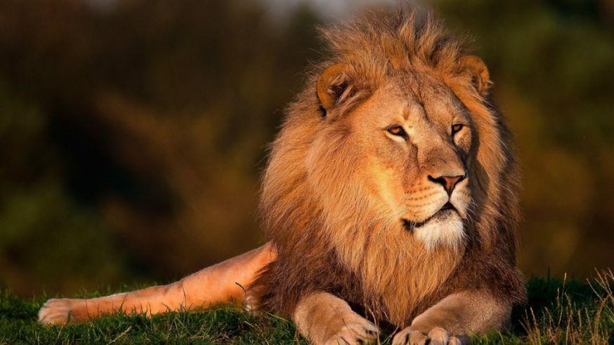 €10.000,- voor freelance fotografie klus van 19 dagen - leeuw in burundi