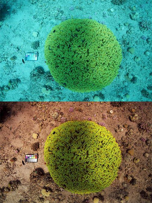 water uit onderwaterfoto's verwijderen