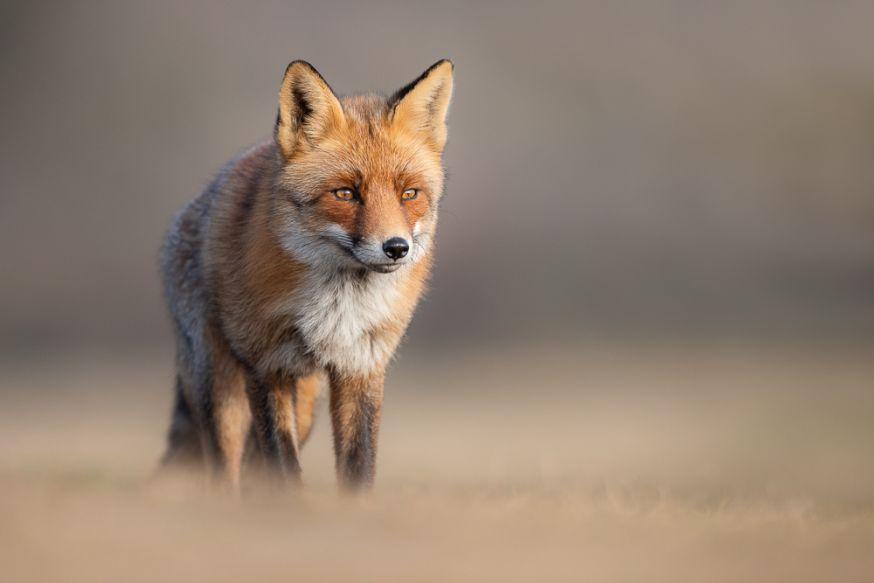 Interview wildlifefotograaf Dick van Duijn- preview
