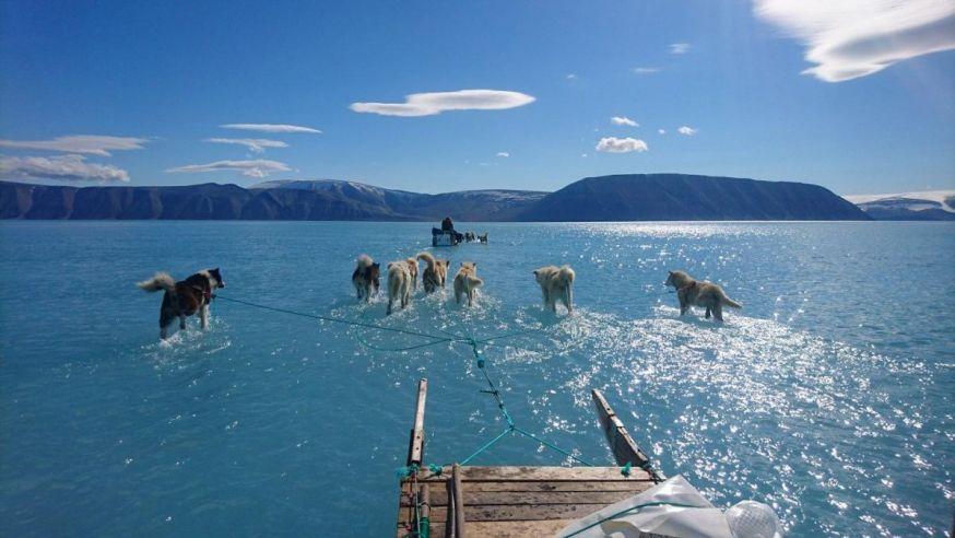 smeltend ijs in groenland sledehonden op water