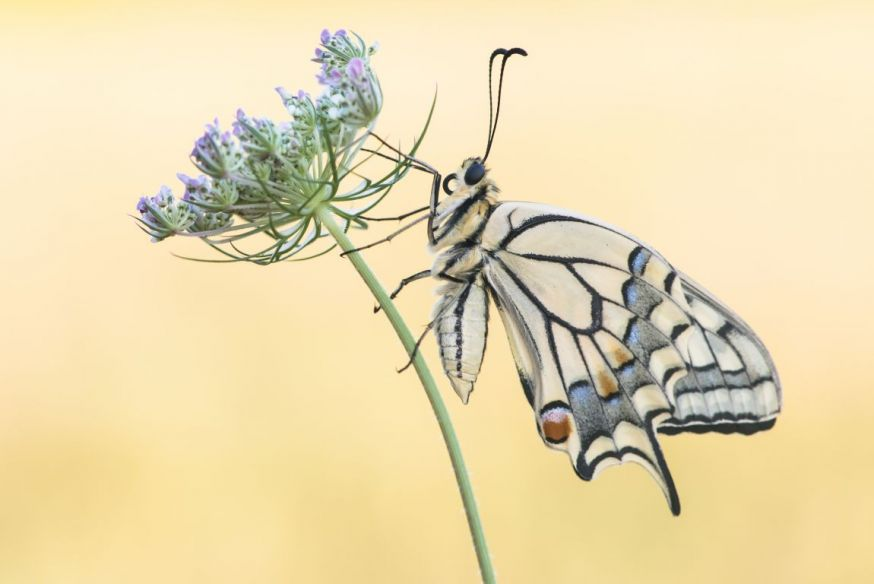 ruurd visser macro vlinder maandopdracht wildlife