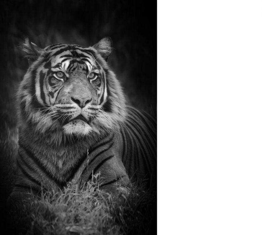 top 10, zwart-wit foto's, zwart-wit, gallery, digifoto Starter