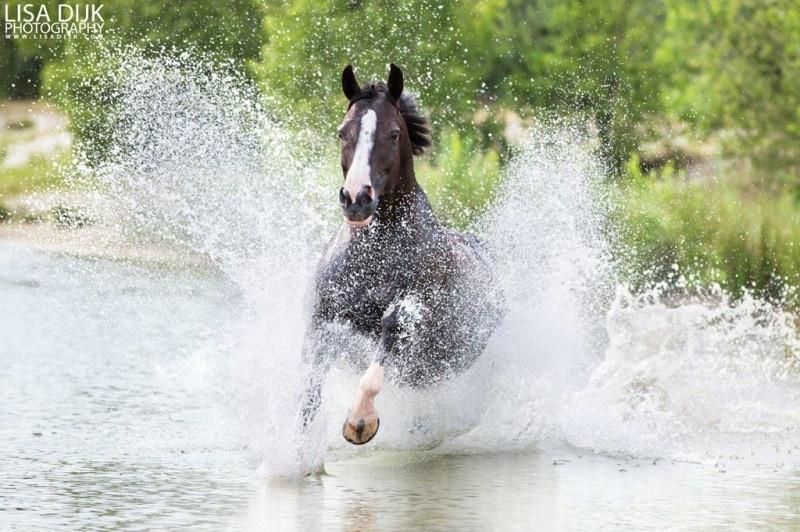 Fotofair 2021, Fotofair, Masterclass paarden in actie, Lisa Dijk, paardenfotografie, masterclass, leren, fotograferen