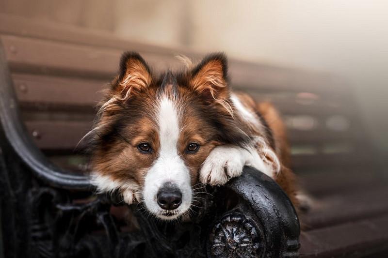 fotofair 2021, fotofair, workshop honden portretfotografie, honden portretfotografie, portretfotografie, honden, workshop, leren, fotografie