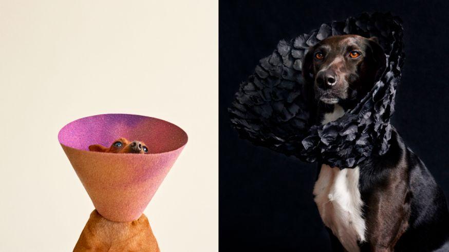 honden lampen kappen medisch kunst grappig
