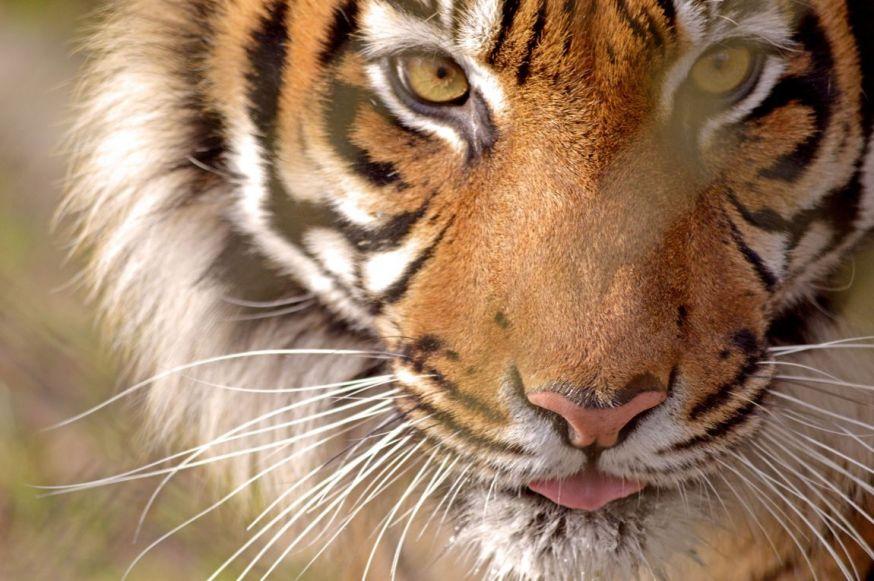 fotowedstrijd wildlife digifoto pro