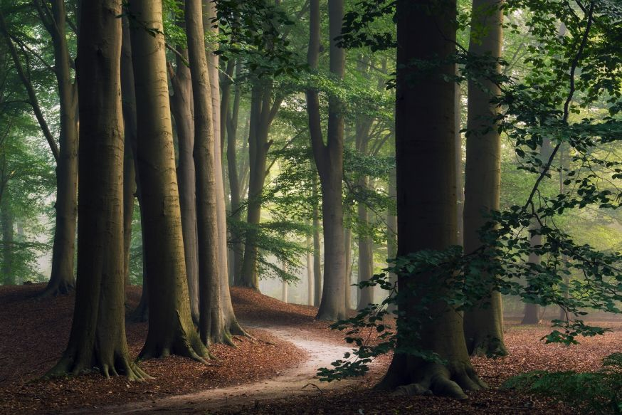 martin podt spotlight bomen bosfotografie