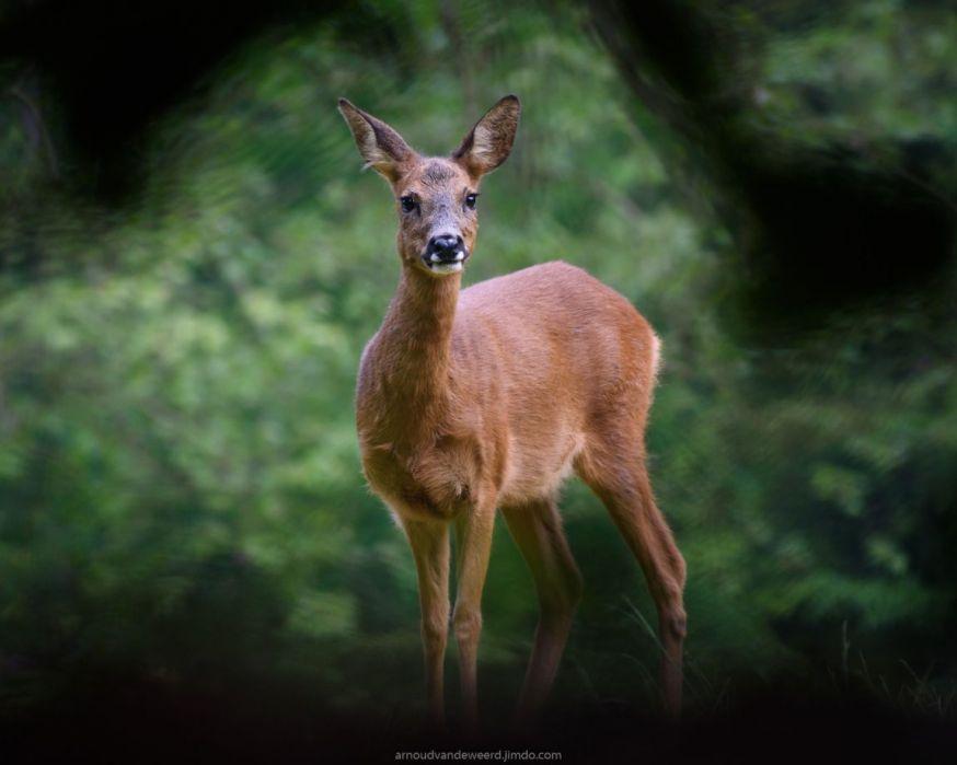 arnoud van de weerd, wildlife winnaar maandopdracht