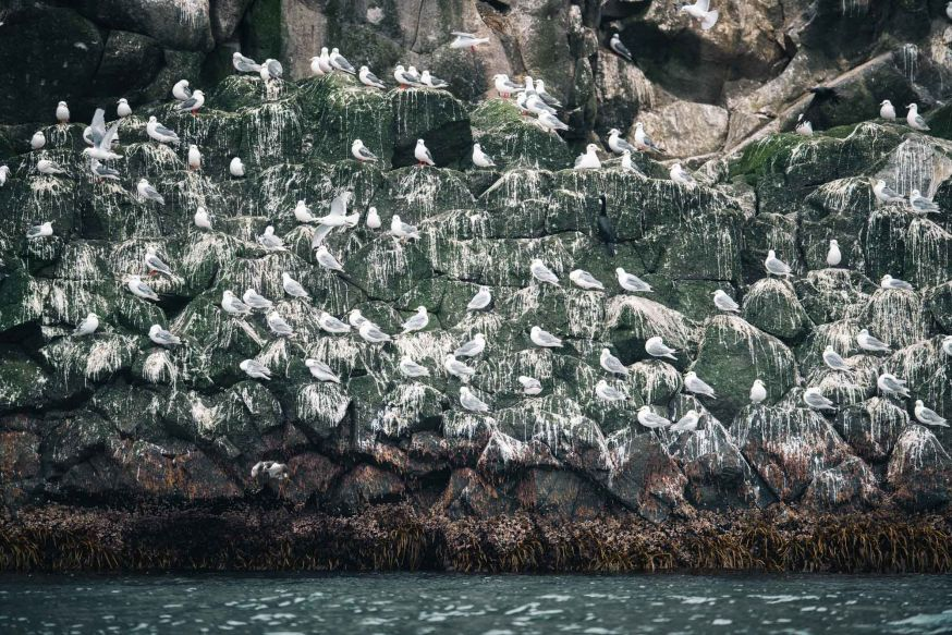 Komandorski eilanden islands nikon ambassador