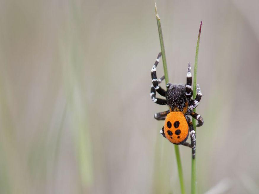 knoeri fast fotofair winnaar maandopdracht wildlife
