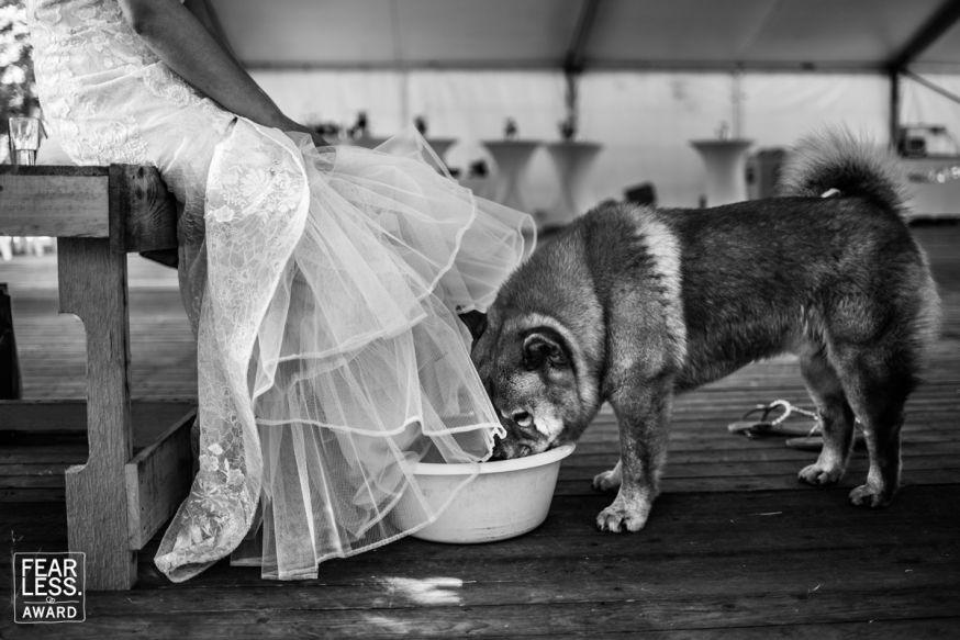 fearless photographers denise motz bruiloft wedding