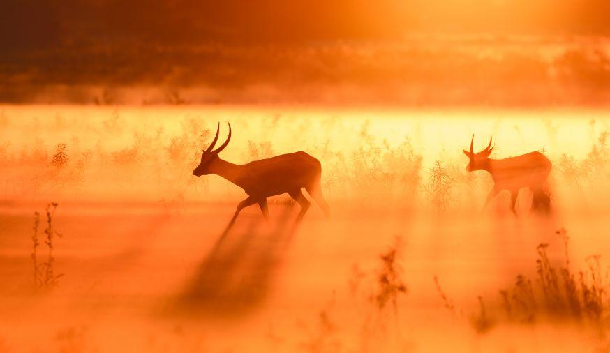 Maandthema kamera express dierenfotografie marsel van oosten