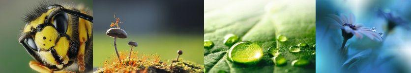 Macrofotografie DIGIFOTO Pro