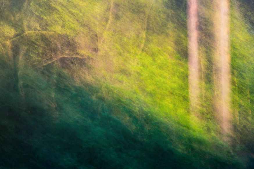 masterclass forest flow fotofair 2019