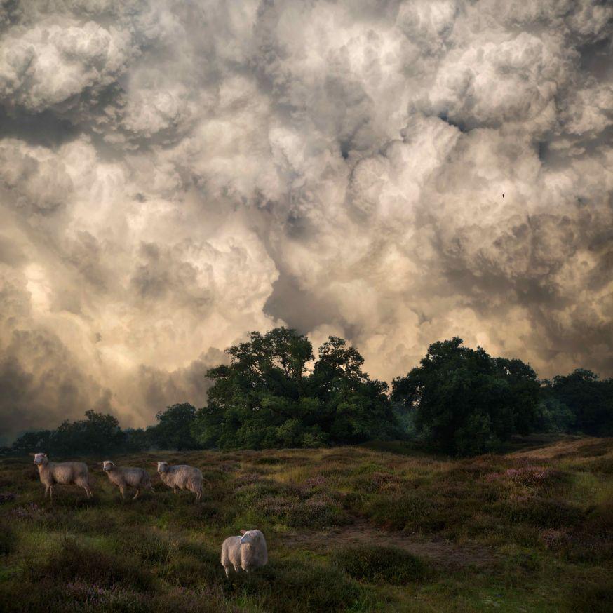 Saskia Boelsums - Landscape #24 - Courtesy Eduard Planting Gallery