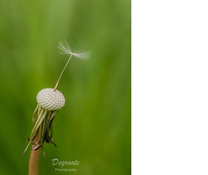 nico degroote, fotowedstrijd macro