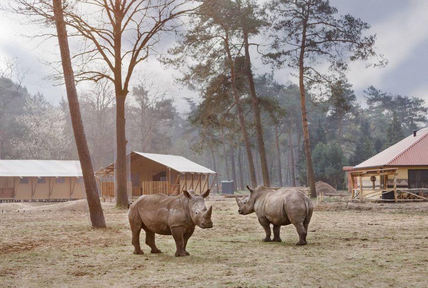 safari resort beekse bergen fotofair