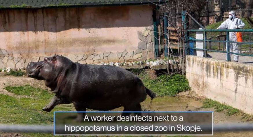 skopje, macedonie, zoo, dierentuin