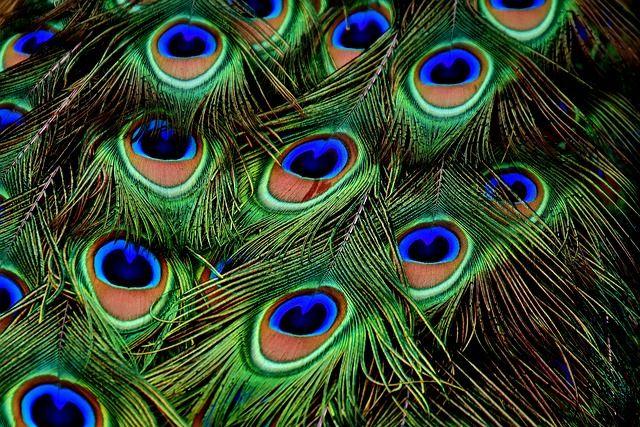 kleurtheorie in fotografie