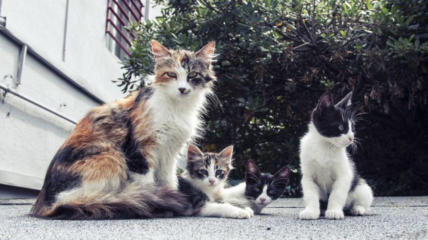 hulp bij de weekopdracht huisdieren fotograferen
