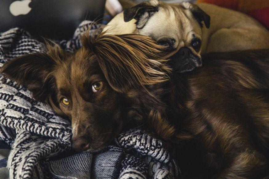 weekopdracht huisdieren fotograferen