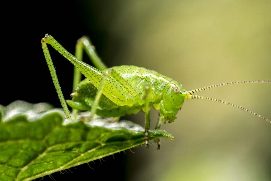 Spotlight lezersfoto 14 juli sophie otten green grasshopper