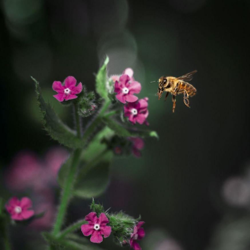 annemijn groeneveld spotlight lezersfoto