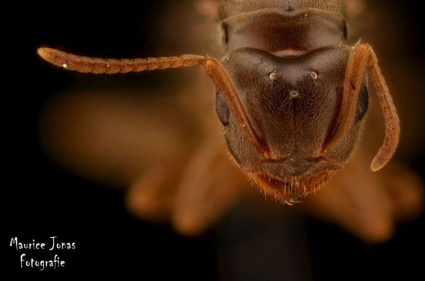 maurice jonas spotlight lezersfoto