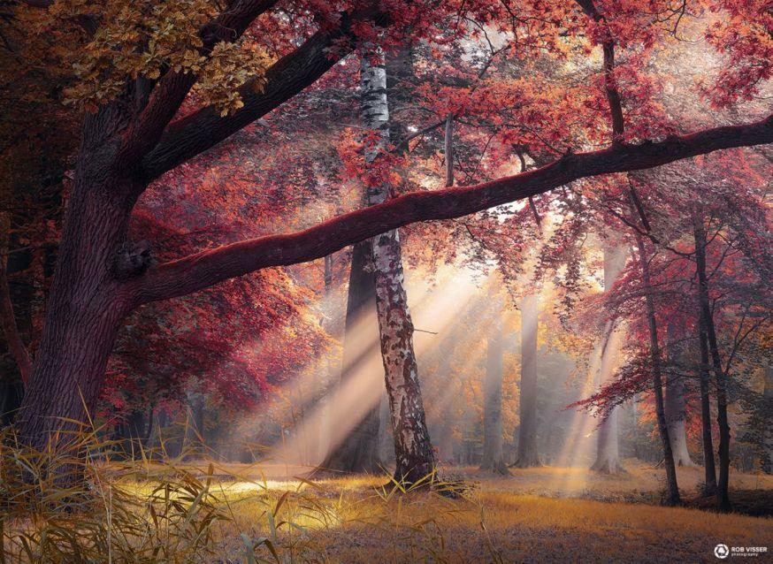 spotlight lezersfoto