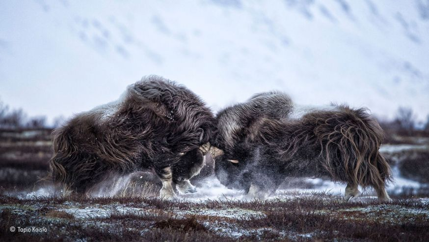People's Choice Award - Wildlife Photographer of the Year