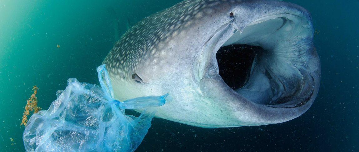 TED Talk van onderwaterfotograaf Thomas Peschak